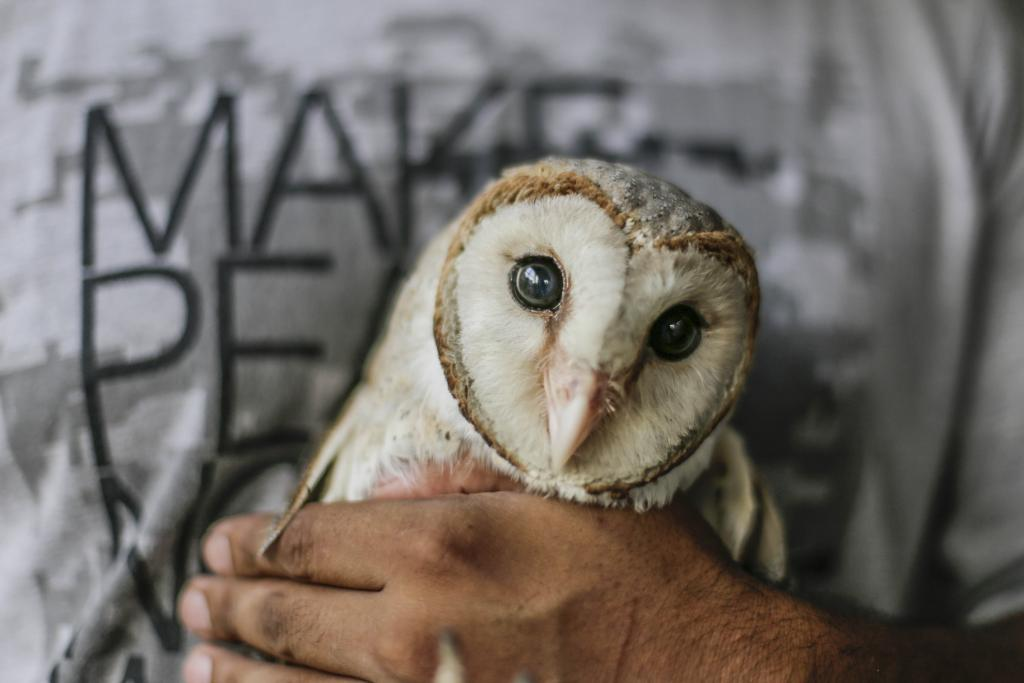 The bird hospital receives around 2,500 birds every year, one of which is this barn owl with injured wings, relaxing in the hands of Mohammad Saud. (Credit: Vikas Choudhary/CSE)