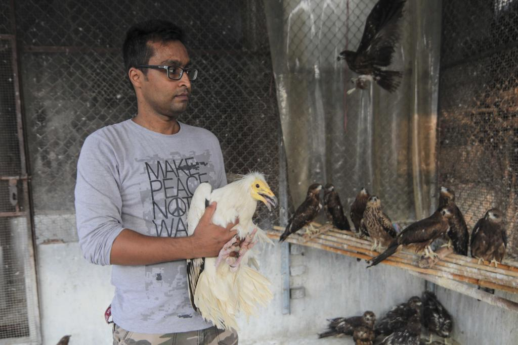 Many birds that are treated in the hospital are injured by long threads or manjha used in kite-flying, which causes sharp cuts. This Egyptian vulture was one of them (Credit: Vikas Choudhary/CSE)