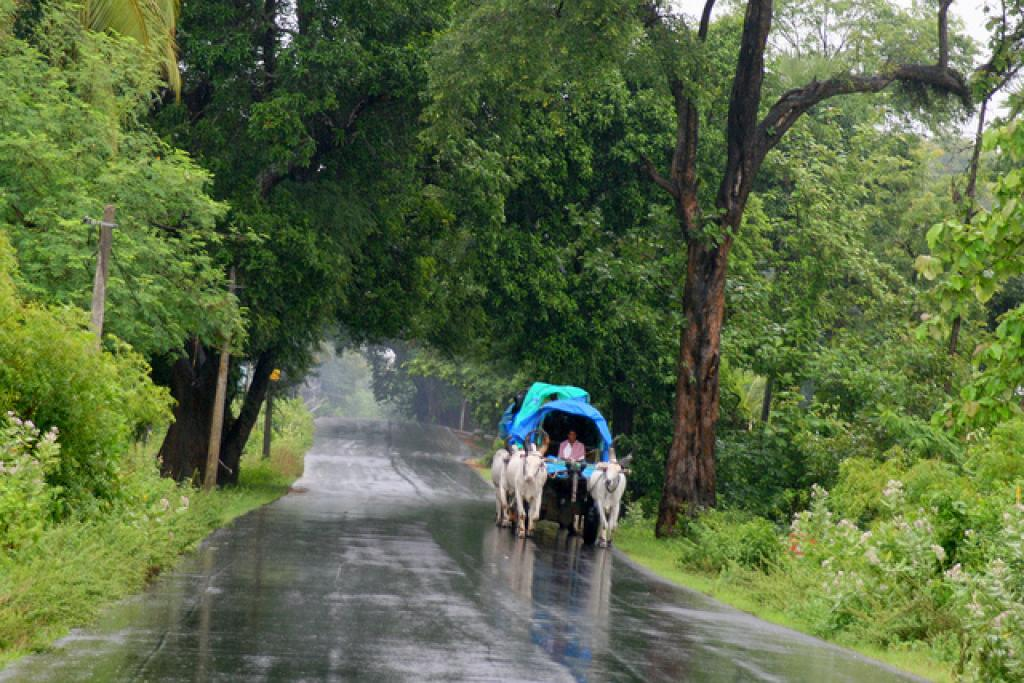 IMD predicts that rainfall is likely to fall within 89 per cent to 111 per cent of the average rainfall of 332.1 mm. Credit: Wikimedia Commons
