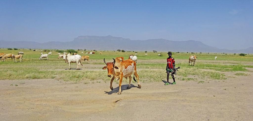 Turkana pastoralists such as Lokkwasinyan carry AK-47 when they take their cattle for grazing (Photographs: Jitendra)