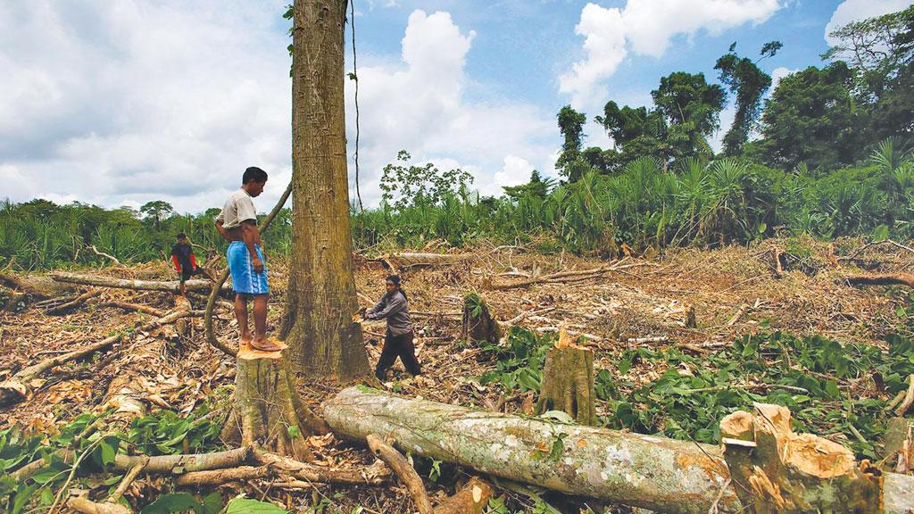 India S Demand For Teak Wood Endangers Ecuador S Rainforests