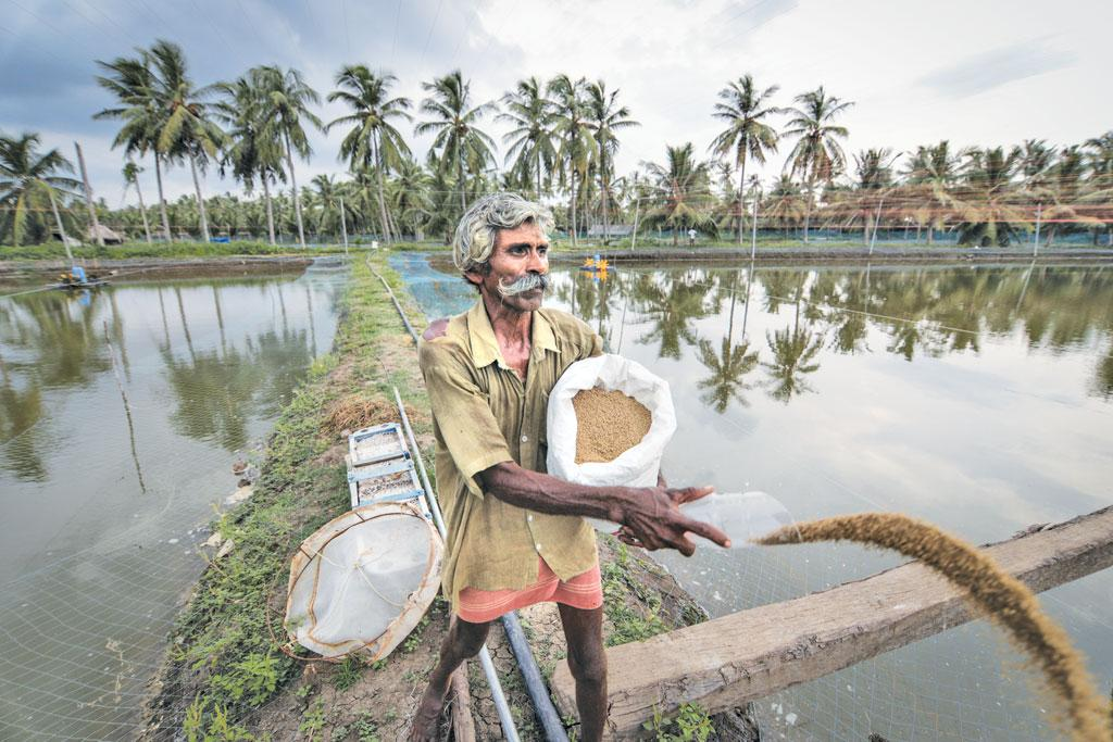 A saline water pond to cultivate Pacific white shrimp (Photos: Vikas Choudhary)