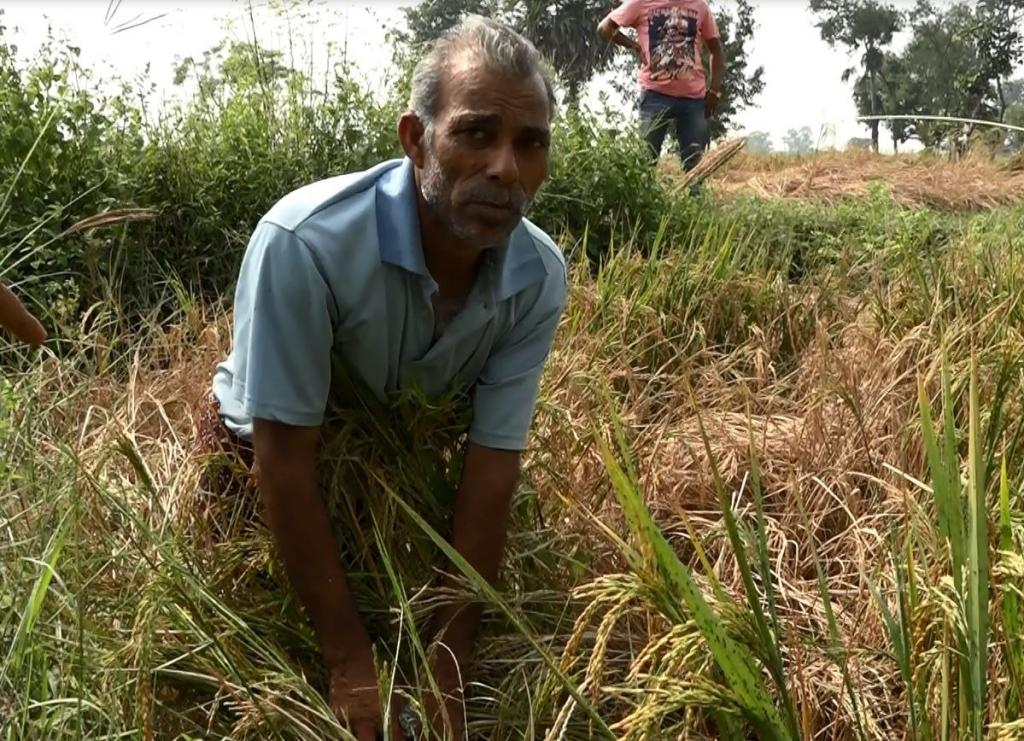 Picture of Bargarh farmer Brunda Sahu who committed suicide on Wednesday. Credit: Umesh Biswal