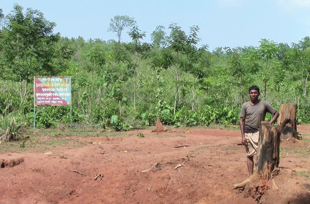 In February, forest officials planted 60,000 teak saplings on a 300-ha forestland that is being considered for community rights under the Forest Rights Act, 2006, in Odisha's Pidikia village (Source: Laxmidhara Murmu)