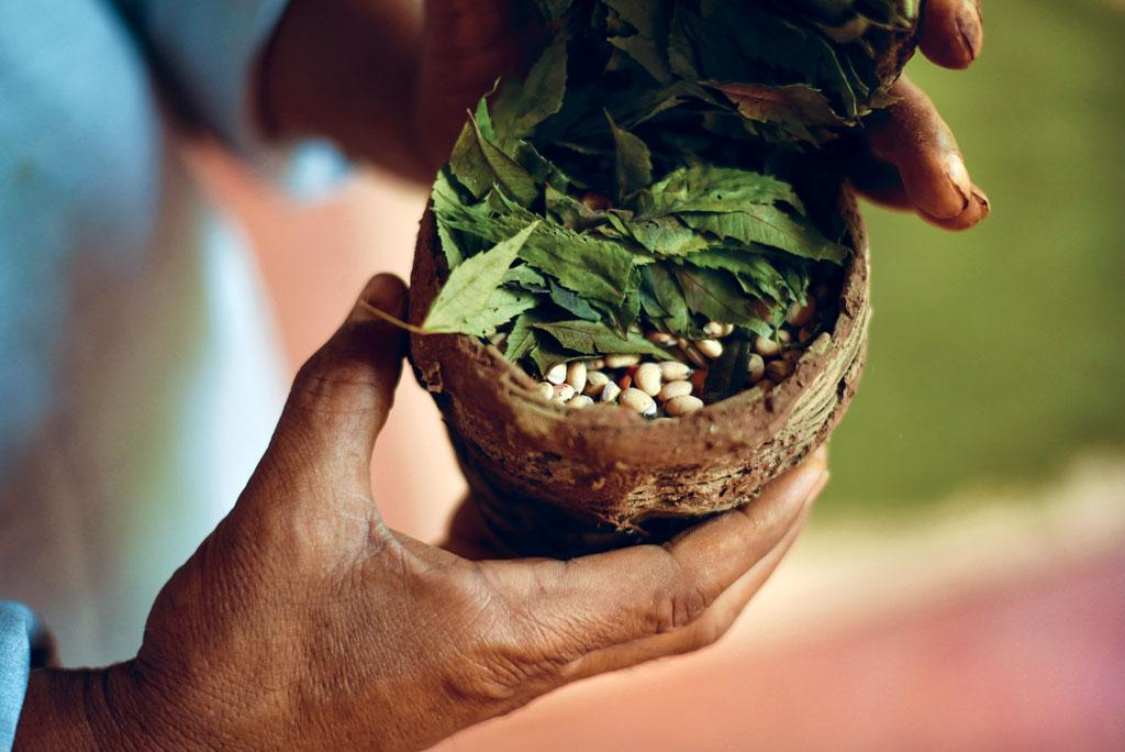 Seed preservation is an integral part of permaculture. It ensures that natives varieties do not  get extinct