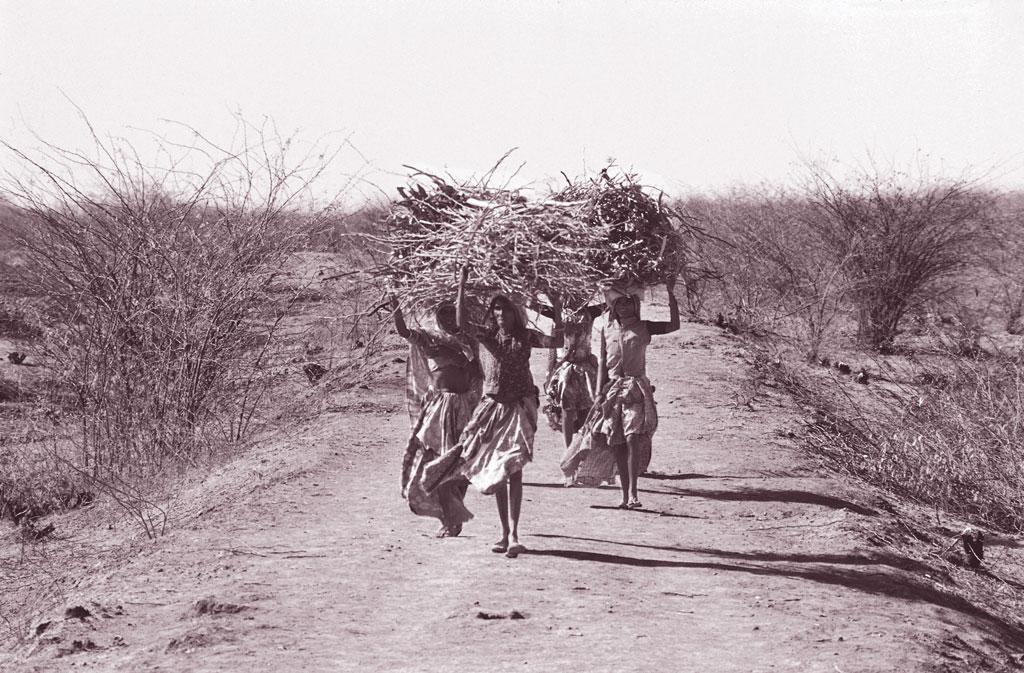 काठियावाड़ प्रायद्वीप और गुजरात का मैदानी हिस्सा शुष्क थार मरुभूमि और आर्द्र कोंकण क्षेत्र के बीच स्थित है