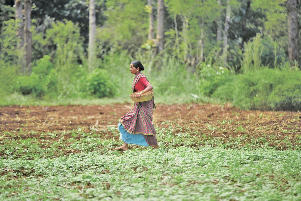 10 एकड़ के अरण्य फार्म में परिवार की जरूरतों को पूरा करने के लिए दो एकड़ में ही अनाज, दालें और तिलहन की फसल उगा ली जाती है। बाकी के आठ एकड़ में सदाबहार फलों के पेड़ और व्यवसायिक पेड़ों को उगाया गया है (फोटो: आदित्यन पीसी / सीएसई)