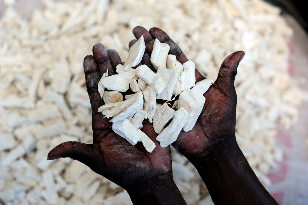 Not enough research is done on cassava, the highest produced crop in Africa. Credit: William Murphy / Flickr