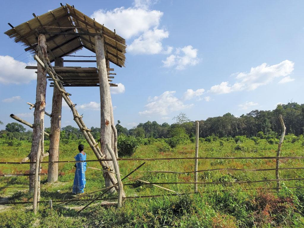 A forest department plantation in Kodalbasti village of West Bengal's Alipurduar district. Village residents say that plantations by forest department have not been successful