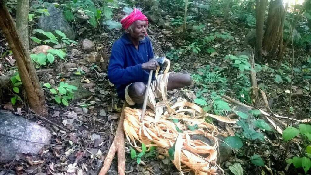 Mankidia tribe debarking  Siali fiber in Similipal Tiger Reserve. Credit: Subrat Nayak