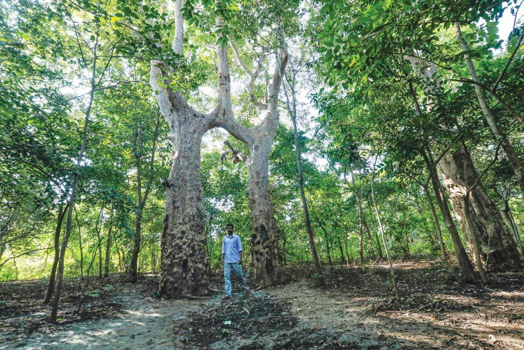 The sight of two