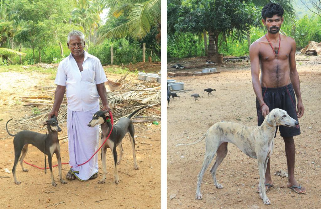 (Left) Kanni is a sighthound from Tamil Nadu which is given as a gift to the bride in marriage (right) Caravan Hound is a dog trained to guard parades