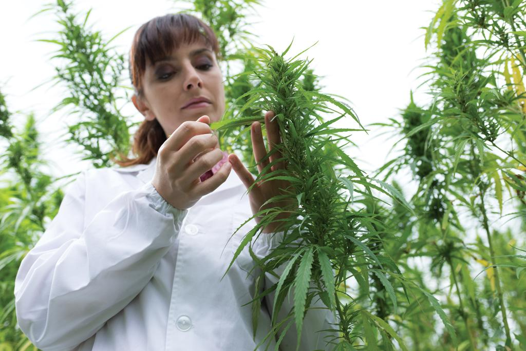 Epileptic children have shown positive outcomes due to marijuana associated treatments
