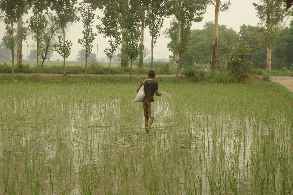 Farmers need more accurate weather forecast, and the meteorological department needs to be made accountable for making inaccurate forecasts. Credit: Agnimirh Basu