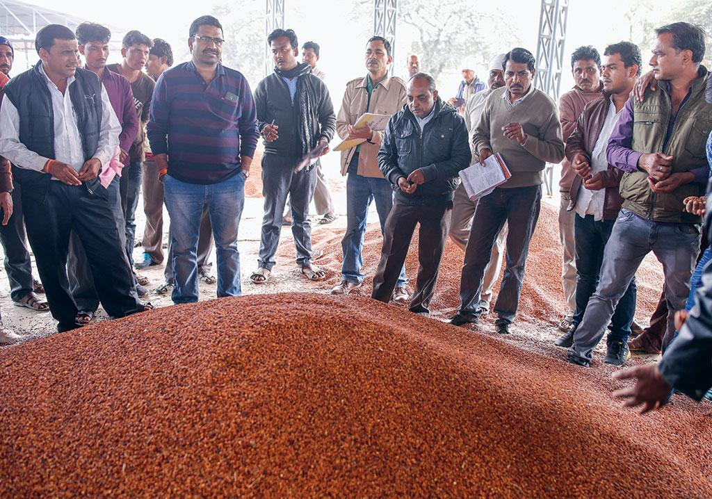 Bhavantar Bhugtan Yojana has resulted in a surge in supply of grains in mandis and a crash in prices (Photographs: Vikas Choudhary)
