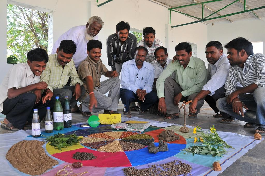 Designing appropriate seed systems for climate resilience is important in rain-fed areas, especially when it comes to smallholder farmers. Credit: Meeta Ahlawat