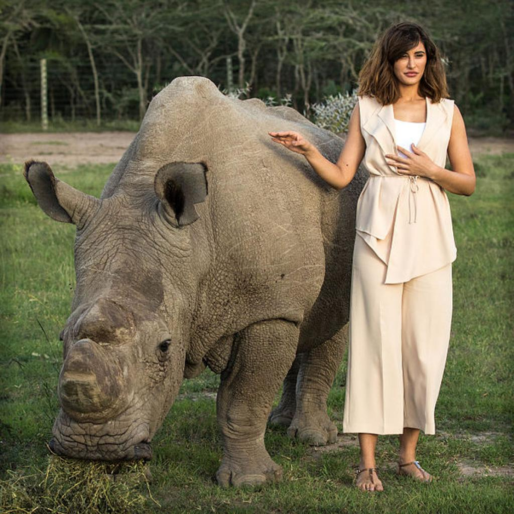 Bollywood actress Nargis Fakhri stands with 'Sudan', the world's last male Northern White rhino at Ol Pejeta Conservancy, Kenya on May 22, 2015  Credit: Wikimedia