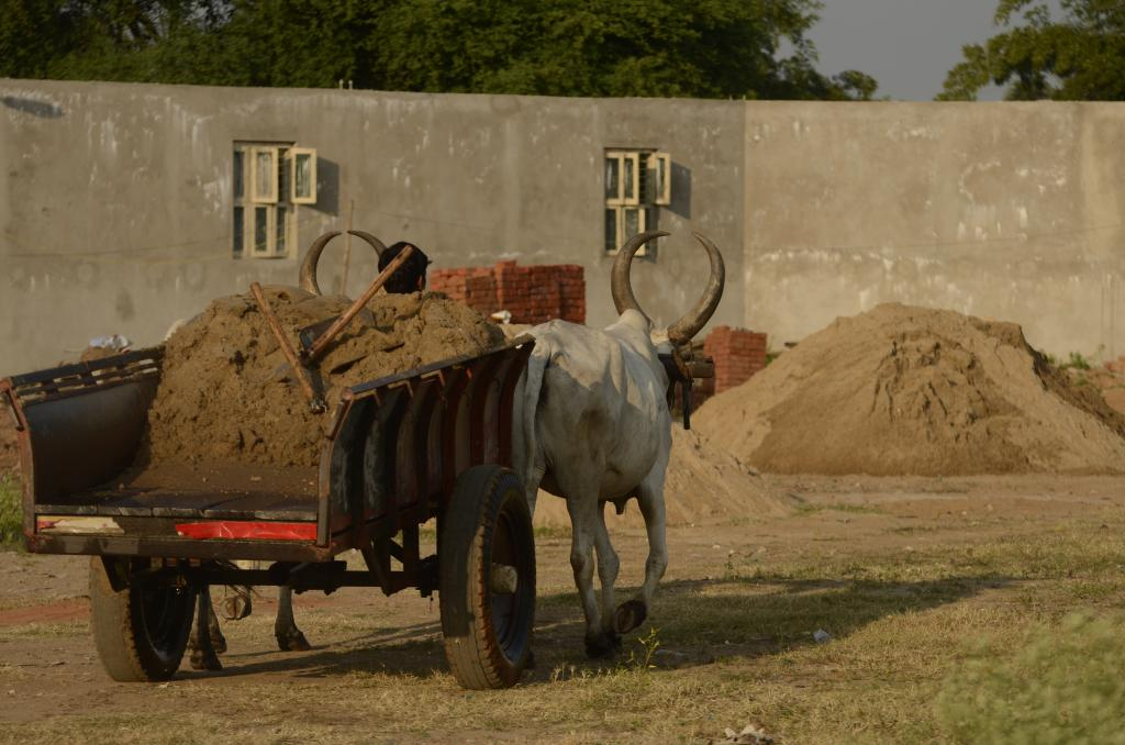 Sand mined from river and carried in bullock cart in Thanjavur, Tamil Nadu  Credit: Wikimedia Commons