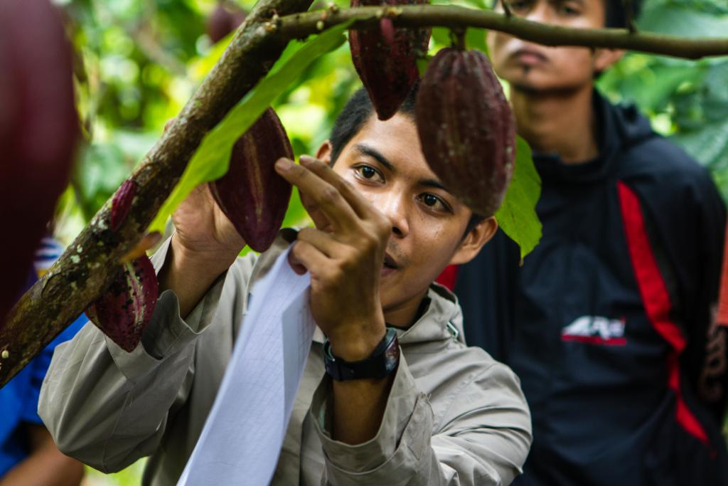 A man examines a cocoa pod on a Rainforest Alliance Certified cocoa farm in Indonesia. Credit: Rainforest Alliance