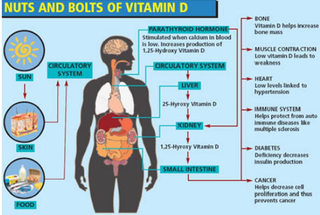 Vitamin D Deficiency Problem Runs Bone Deep