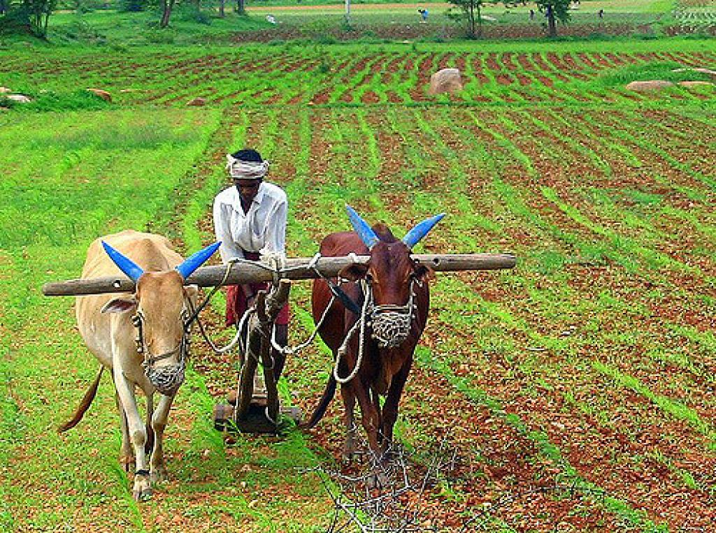 The report clearly establishes that states with lower farm income have higher incidence of rural poverty. Credit: Flickr/Ananth BS