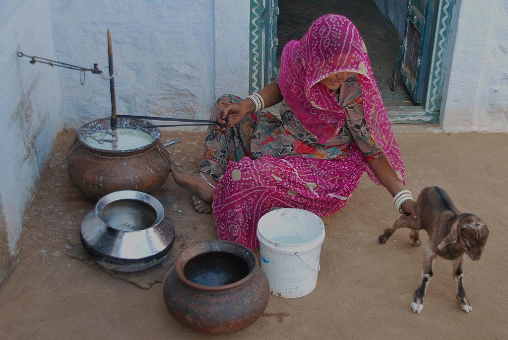 A Bishnoi woman petting a Kid     Credit: Wikimedia Commons