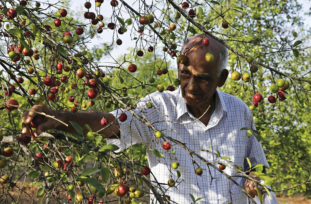 A government support system to promote tree-borne oilseeds such as kokum is missing (Photo: Vikas Choudhary)