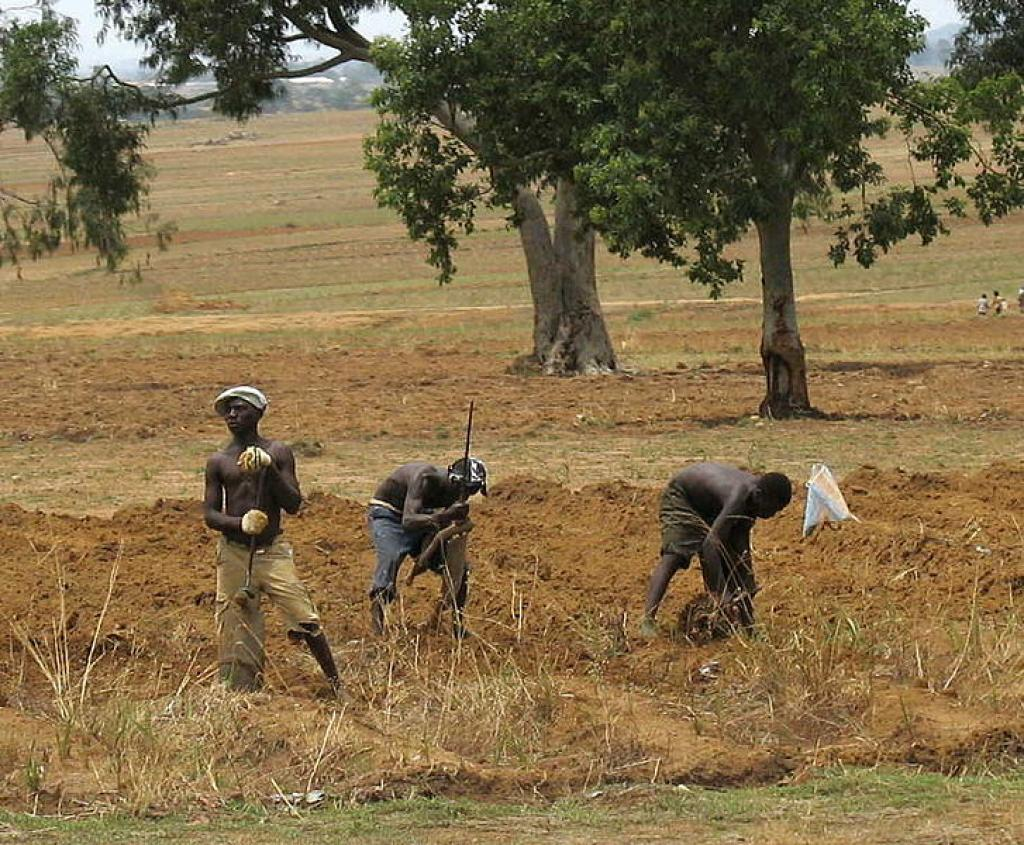 Farmers working in a field in central Nigeria    Credit: Wikimedia Commons