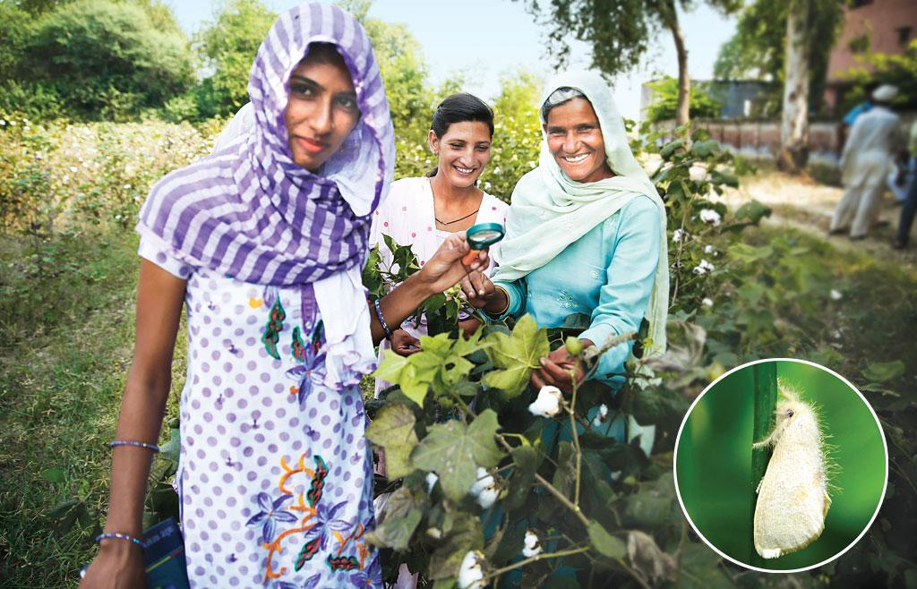 Women farmers are key to the preservation of knowledge, agricultural biodiversity and technologies, innovations and practices.(Photo: Vikas Choudhary/CSE