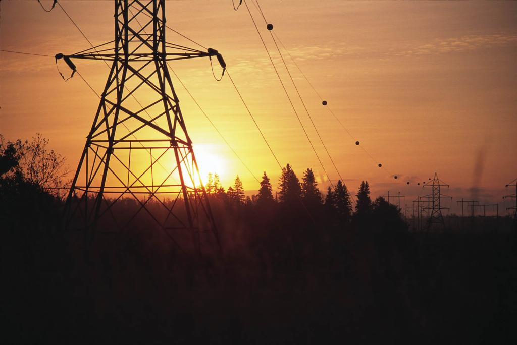 The Forest and Environment Department, in March 2009, noticed that Adani Power Limited had laid the transmission line without waiting for the statutory permission to be granted. Credit: Emera