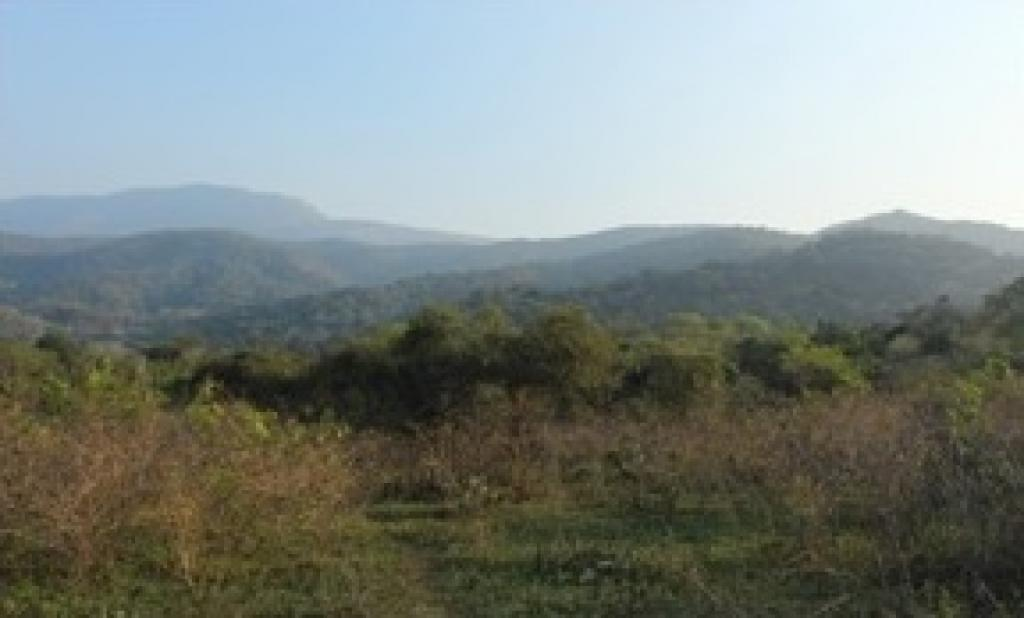 Anaikatty hills in Tamil Nadu, where the new species of shieldtail snake was discovered.