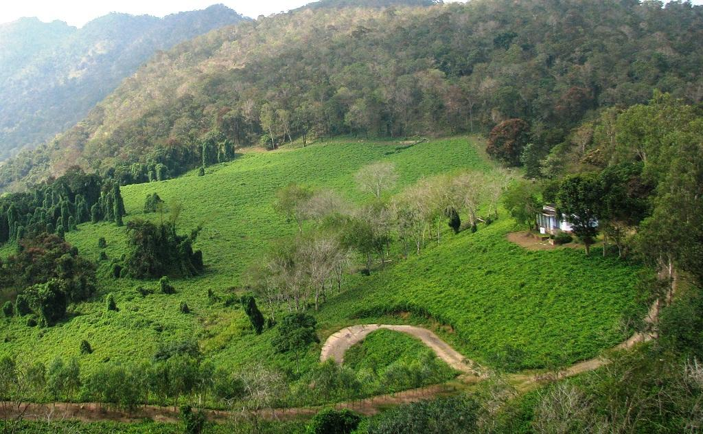 The well-grown trees covered by the climber are seen in this panoramic photo       Credit: V Sundararaju