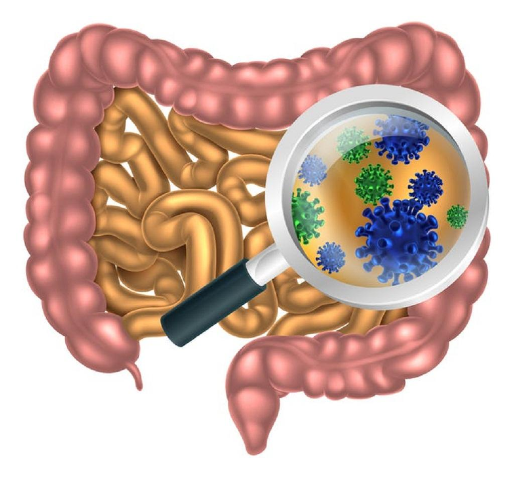 Though examining poop samples scientists working on the American Gut Project are getting a new perspective on the microbes in our guts. By Christos Georghiou/Shutterstock.com