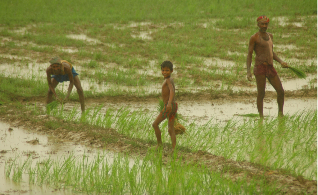 Southwest monsoon, which provides water to more than 50 per cent of the country's farmland, has a direct bearing on the country's agricultural GDP. Credit: Agnimirh basu
