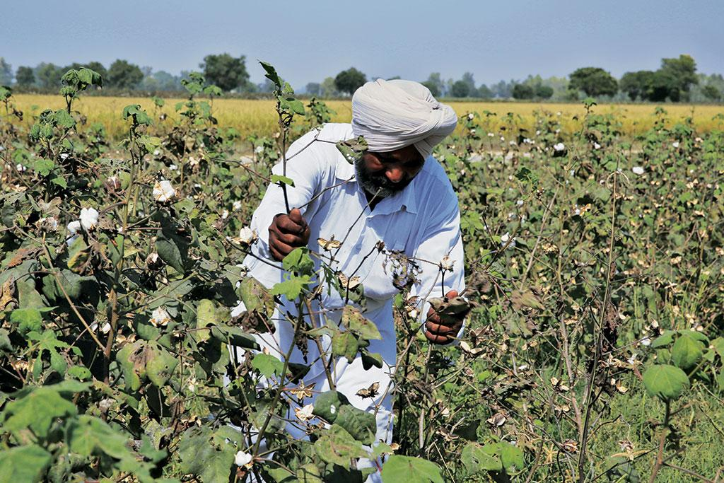 Revoking Monsanto's GM cotton patent is of little help to farmers