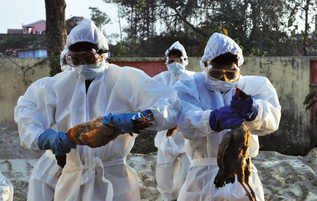 In 2014 alone, bird flu