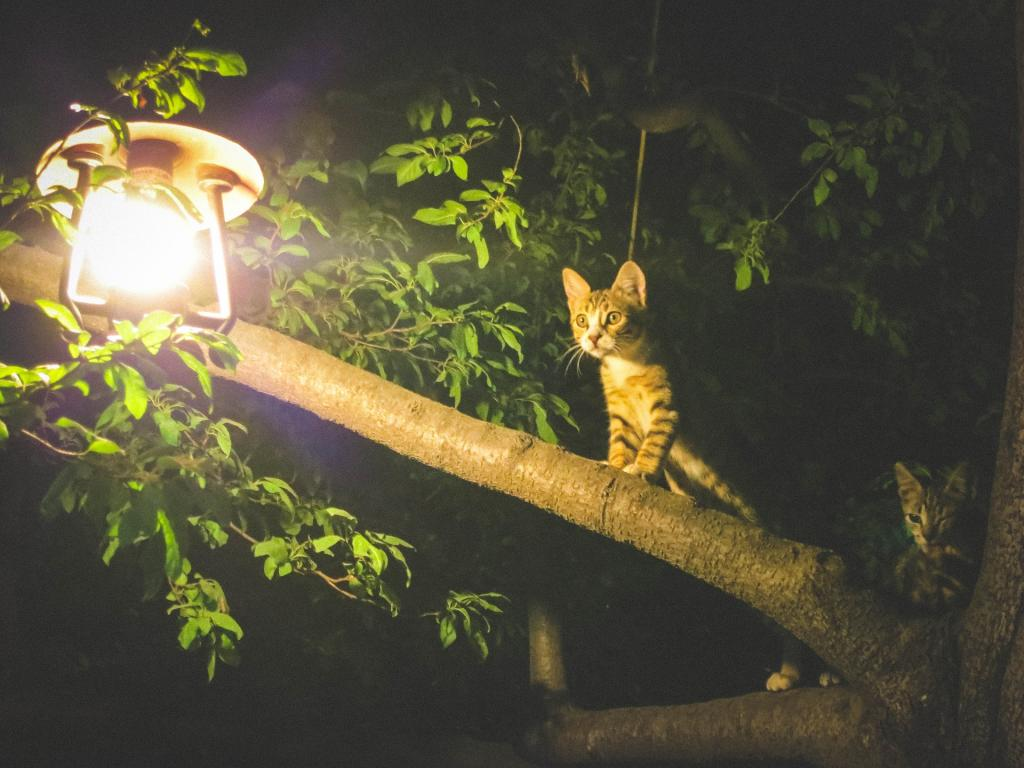 Wild animals living close to cities and roads can develop cancer as light at night can cause hormonal changes and may lead to cancer. Credit: StockSnap/Pixabay