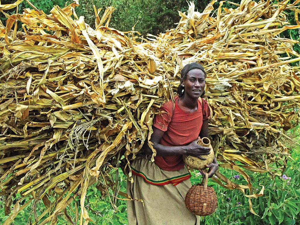 In just two decades, Zimbabwe has become a net importer of maize, a staple crop. The country imports over 80 per cent of all its foods (Photographs: Creative Commons)