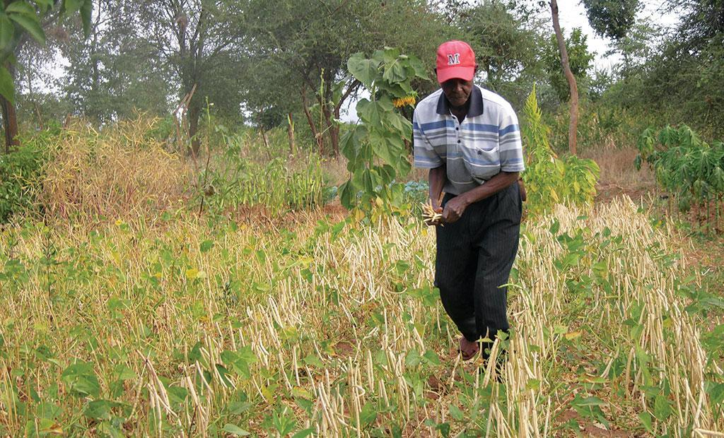 Innovative mechanisms to fight chronic water shortage have helped farmers in Kenya. Peter Ndabi of Makueni county in east Kenya says he uses a chisel-shaped plough that digs deeper and allows rainwater to reach lower layers of soil (Source: Leopold K)