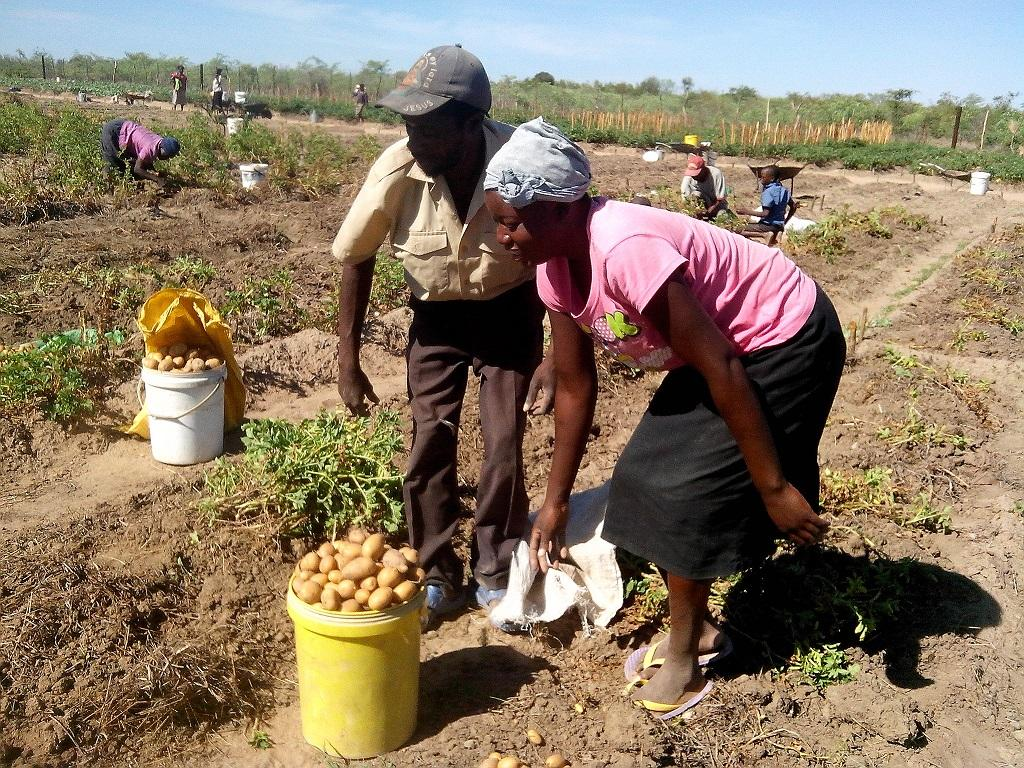 Over 80 per cent farmers in Zambia are predominantly reliant on rain-fed agriculture. Credit: CDKNetwork / Flickr