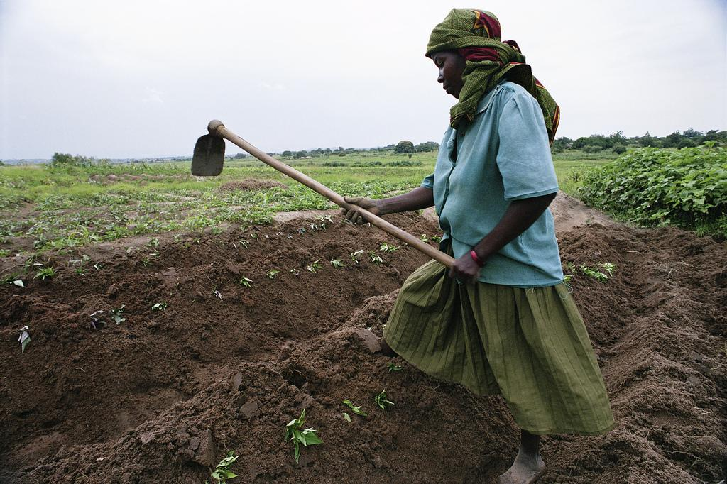 Many African countries lack capacity, knowledge and experience to plan and implement sustainable soil management programmes. Credit: Wikimedia Commons