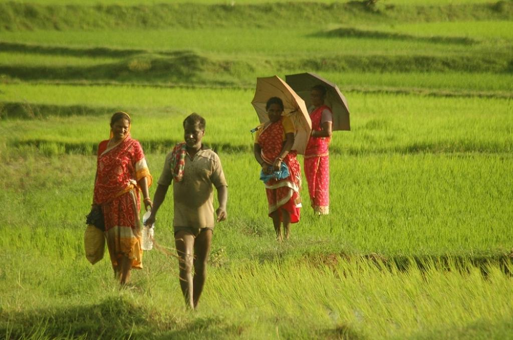 In case of cultivated land, the services provided are food, water, raw material, good air quality, waste, soil fertility, pollination, genetic diversity and recreation. Credit: Agnimirh Basu