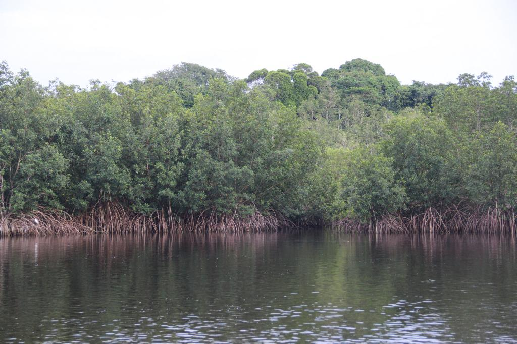 Mangroves are being cleared for the rapid expansion of the capital city, Libreville. Credit: Worldbank Gabon/Flickr
