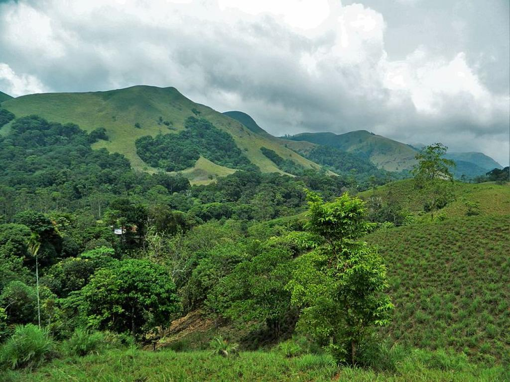 Forests of the Western Ghats          Credit: Wikimedia Commons