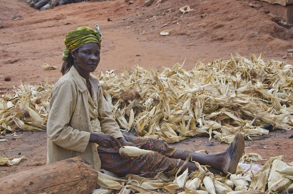 White maize will continue to play a pivotal role in ensuring food security of sub-Saharan Africa. Credit: USAID / Flickr
