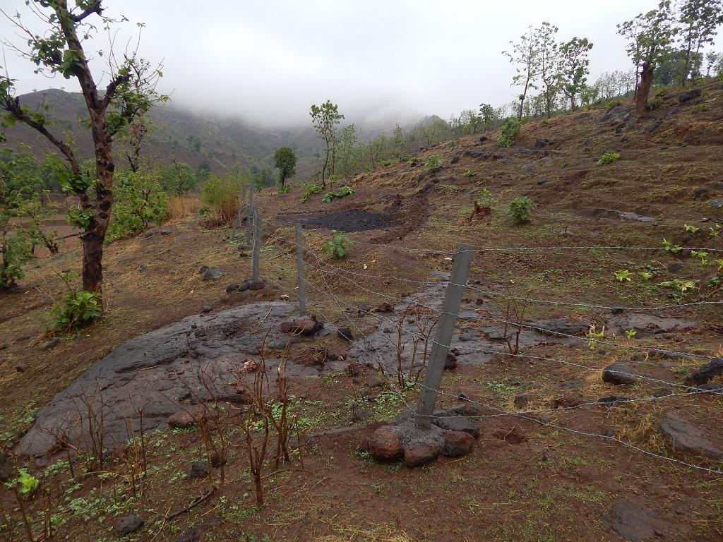 The forest department is undertaking steps to build a fence around dug up lands to prevent adivasi forest dwellers from accessing land claimed under FRA. Credit: Authors
