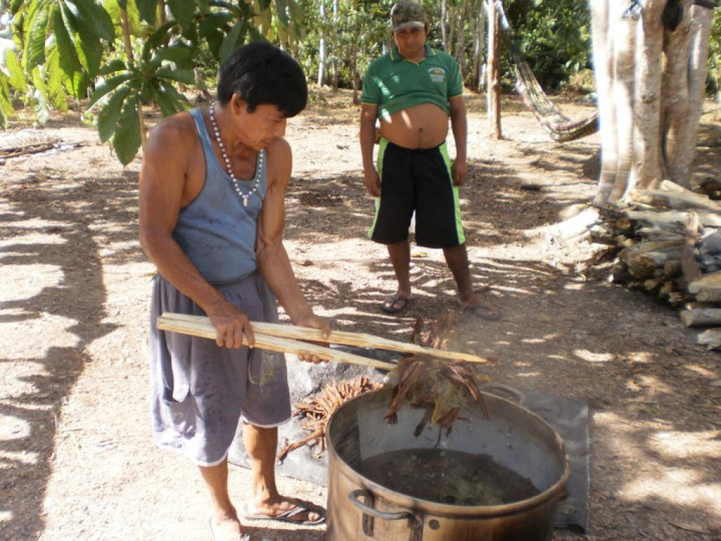 Ayahuasca being made in the Amazon            Credit: Wikimedia Commons