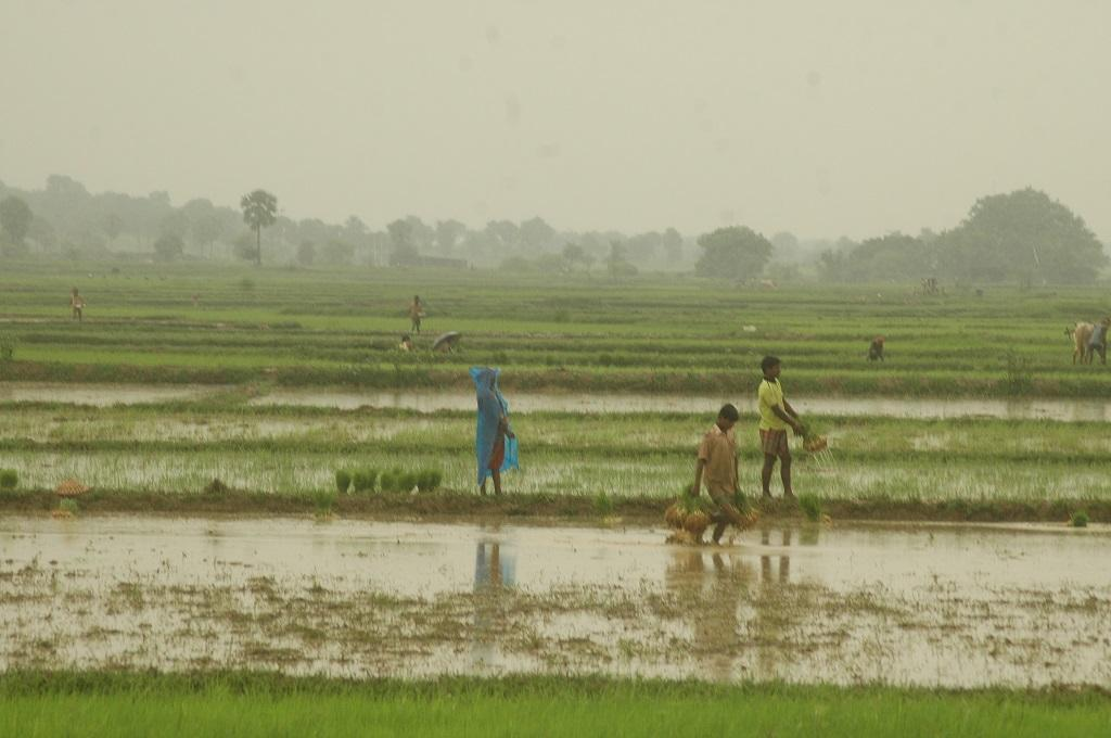 Impact of stalled monsoon: 30-45% decline in sowing of kharif crops in June