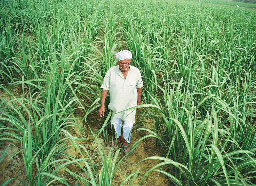 Chandrapal Singh of Sambhal district's Mubarakpur village says that despite delayed returns farmers persist with sugarcane because one sowing gives two yields. Credit: PC Adithyan