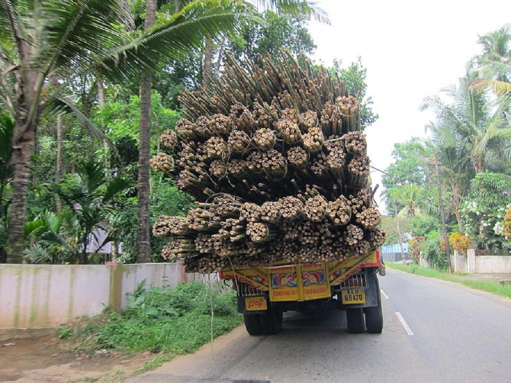 This is not the first time the gram sabha has asked the forest department for the transit permit booklet to take bamboo out of forest land for sale. Credit: Wikimedia Commons